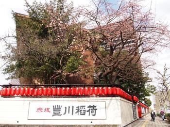 エドヒガン桜 (2).JPG